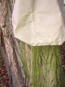 Drzewa 2019